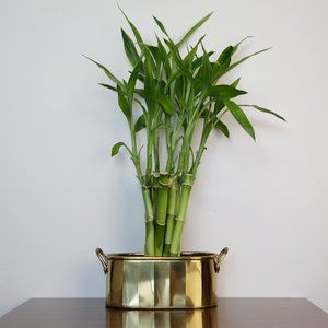 Vintage Small Oblong Brass Planter with 2 Handles
